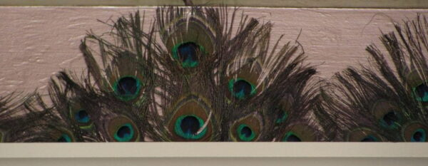 Peack Feathers in Ceiling Design