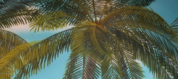 Painted Palm Tree Mural by Arthur Morehead Art-Faux Wall Designs